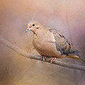 Jai Johnson - Mourning Dove On A...
