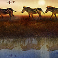 R christopher Vest - Moving North Zebras And...