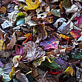 Rona Black - Multicolored Autumn...
