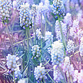 Lali Kacharava - Muscari morning