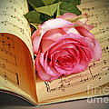 Inspired Nature Photography By Shelley Myke - Musical Rose