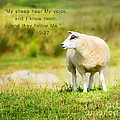 MaryJane Armstrong - My Sheep Know Me