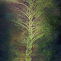 Angela A Stanton - Mysterious Tree in...