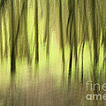 Inspired Nature Photography By Shelley Myke - Mystic Forest