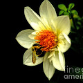 Inspired Nature Photography By Shelley Myke - Natures Pollinator