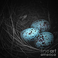 Trish Mistric - Nest of 3