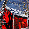 Karol  Livote - New England Winter