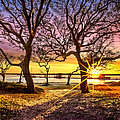 Debra and Dave Vanderlaan - Oak Trees at Sunrise