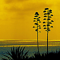 Ben and Raisa Gertsberg - Ocean Sunset With Agave...