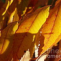 Anna Lisa Yoder - October Sumac Leaves in...
