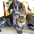 Michele  Avanti - Old Friends Cat n Dog