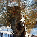 Colette Hera  Guggenheim - Old Tree Friend Denmark