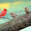 Janette Boyd - One Cardinal and Two...