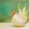 Kay Pickens - Onion Bird
