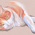 MM Anderson - Orange and White Tabby...
