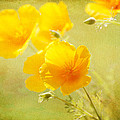 Lynn Bauer - Orange California Poppies
