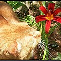 Kristy Cotone - Orange Tom Cat Smelling...