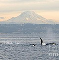 Gayle Swigart - Orcas and Mt. Rainier