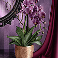 April Moen - Orchid I