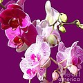 Janette Boyd - Orchids for Spring