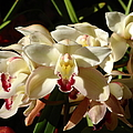 Glenn McCarthy Art and Photography - Orchids