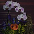 Leslie Crotty - Orchids Iris and a Rose...