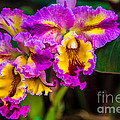 Rene Triay Photography - Orchids
