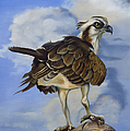 Phyllis Beiser - Osprey And A Mullet