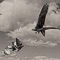 Wes and Dotty Weber - Osprey Surprise Attack...
