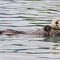 Chris Scroggins - Otterly Adorable