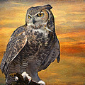 Barbara Manis - Owl on a Limb