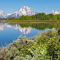 Aaron Spong - Oxbow Bend Wildflowers...
