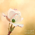 Reflective Moments  Photography and Digital Art Images - Pacific Dogwood