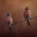 Jai Johnson - Pair of Finches