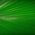 Liudmila Di - Palm leaf abstract