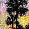 Kathy Bassett - Palm Sunset