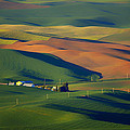 Nikolyn McDonald - Palouse - Washington -...
