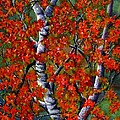Janine Riley - Paper White Birch...