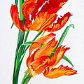 Tracey Harrington-Simpson - Parrot Tulips