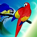 Amanda Struz - Parrots By Two