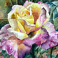 Anne Gifford - Partitioned Rose