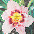 Terry Mellway - Pastel Daylily