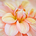 Julie Palencia - Pastel Petals and Drops