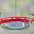 Lynn Bauer - Peace at the Feeder