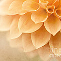 Reflective Moments  Photography and Digital Art Images - Peach Delight