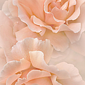 Jennie Marie Schell - Peach Rose Flowers...