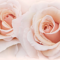 Jennie Marie Schell - Peach Roses from the...