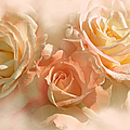 Jennie Marie Schell - Peach Roses in the Mist