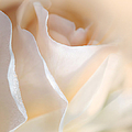 Jennie Marie Schell - Peaches and Cream Rose...