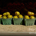 Miriam Danar - Sunny Green Pears at the...